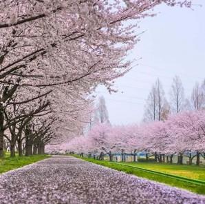 Thời tiết Canada tháng 4 và những lưu ý cho người đi du lịch