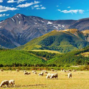 Giải đáp thắc mắc du lịch New Zealand mùa nào đẹp nhất