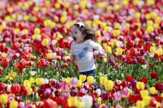 le-hoi-hoa-tulip-to-chuc-vao-thoi-tiet-canada-thang-5